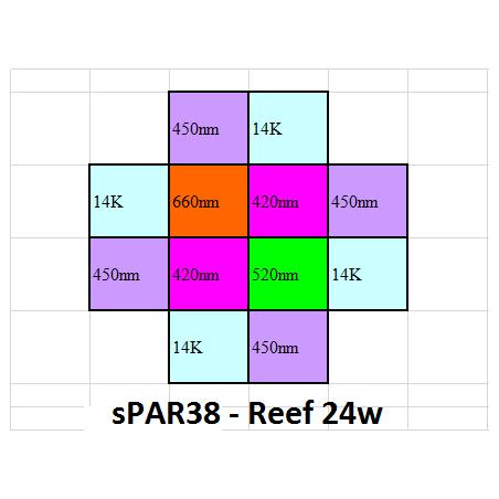 sPAR38 - Reef