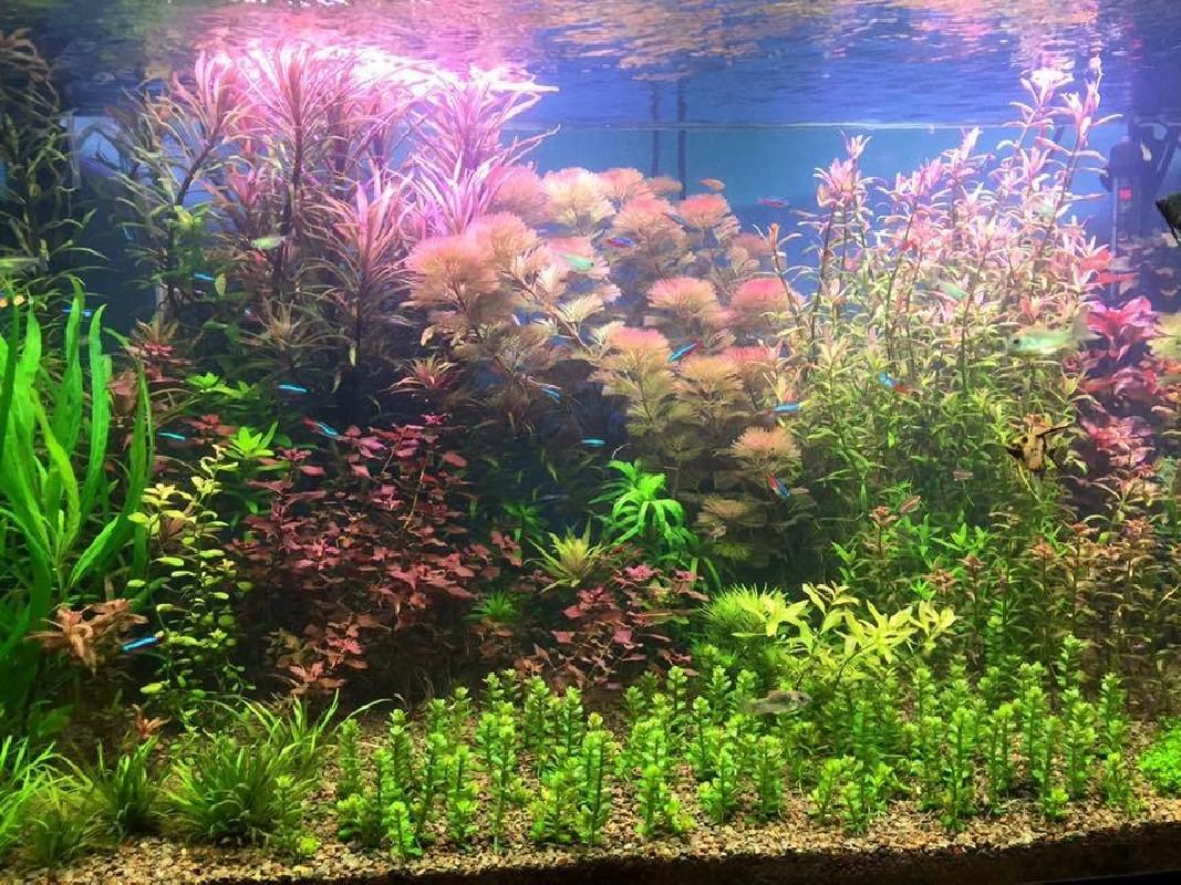 Basic Fresh Water Plant LED Light
