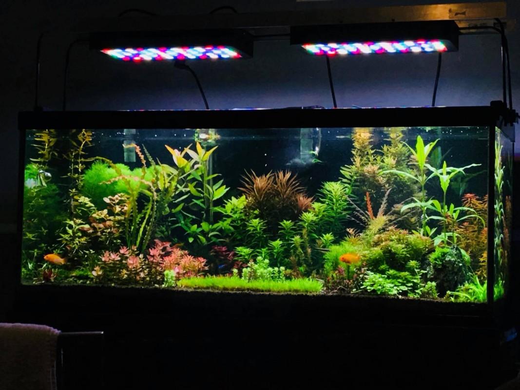 "sBox Pro 32"" (Timer) Fresh Water Plant"