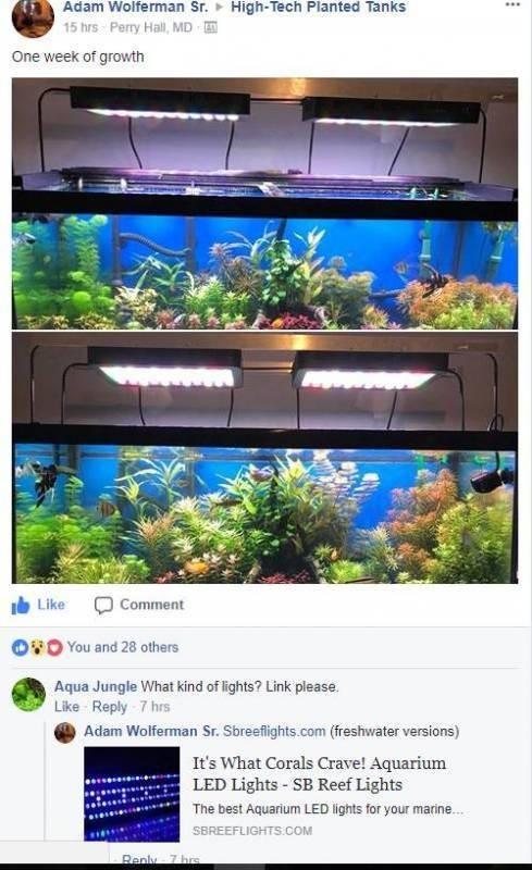 """Basic 32"""" Freshwater Plant"""